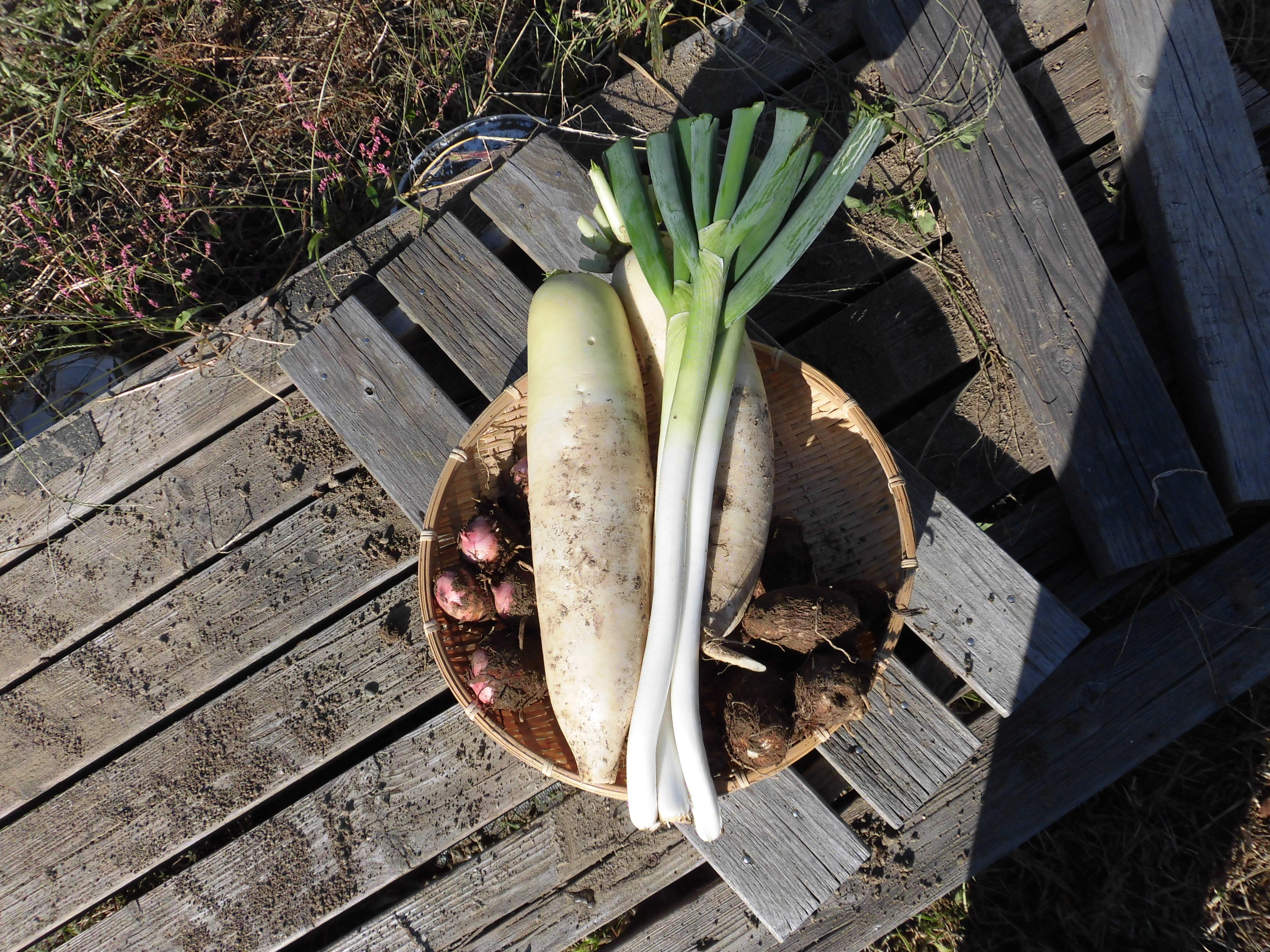 無農薬野菜のミレーの 口コミが気になる?野菜栽培士が調査した!
