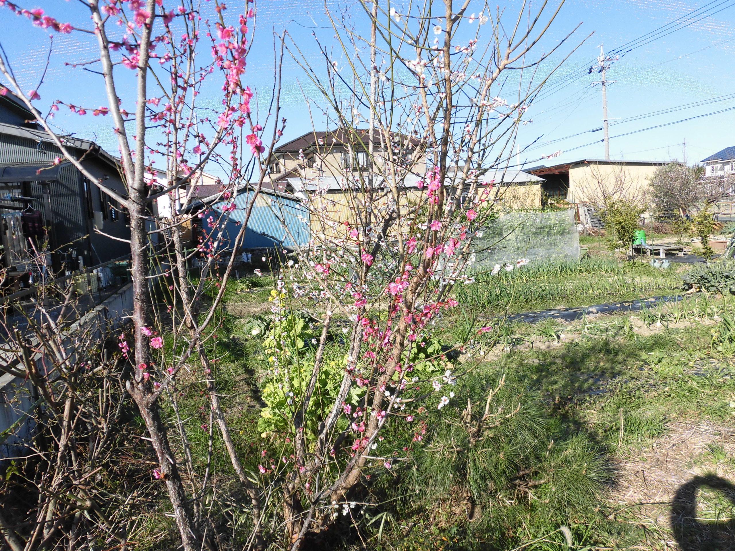 野菜栽培士が菜園を公開!立春の菜園で今年の豊作を祈る!